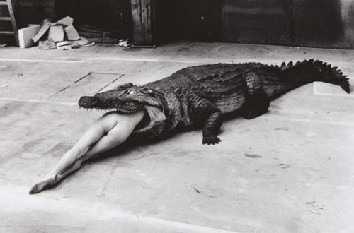 helmut-newtonCrocodile