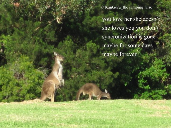 kangaroo-fmaily-1331292
